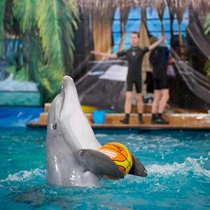 Дельфинарии, океанариумы Анны