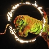 Цирки в Анне