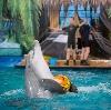 Дельфинарии, океанариумы в Анне